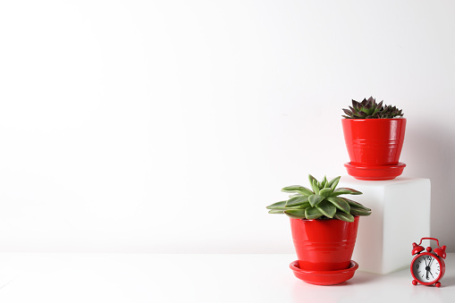 518847146 istock photo Red and white frame poster with plant in pot on table. 955828288