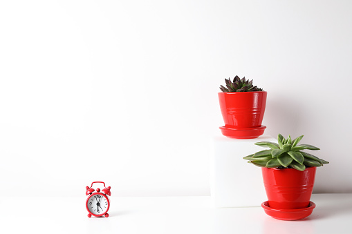 518847146 istock photo Red and white frame poster with plant in pot on table. 955828404