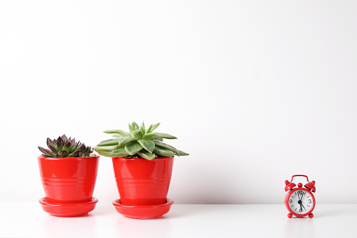518847146 istock photo Red and white frame poster with plant in pot on table. 955828414