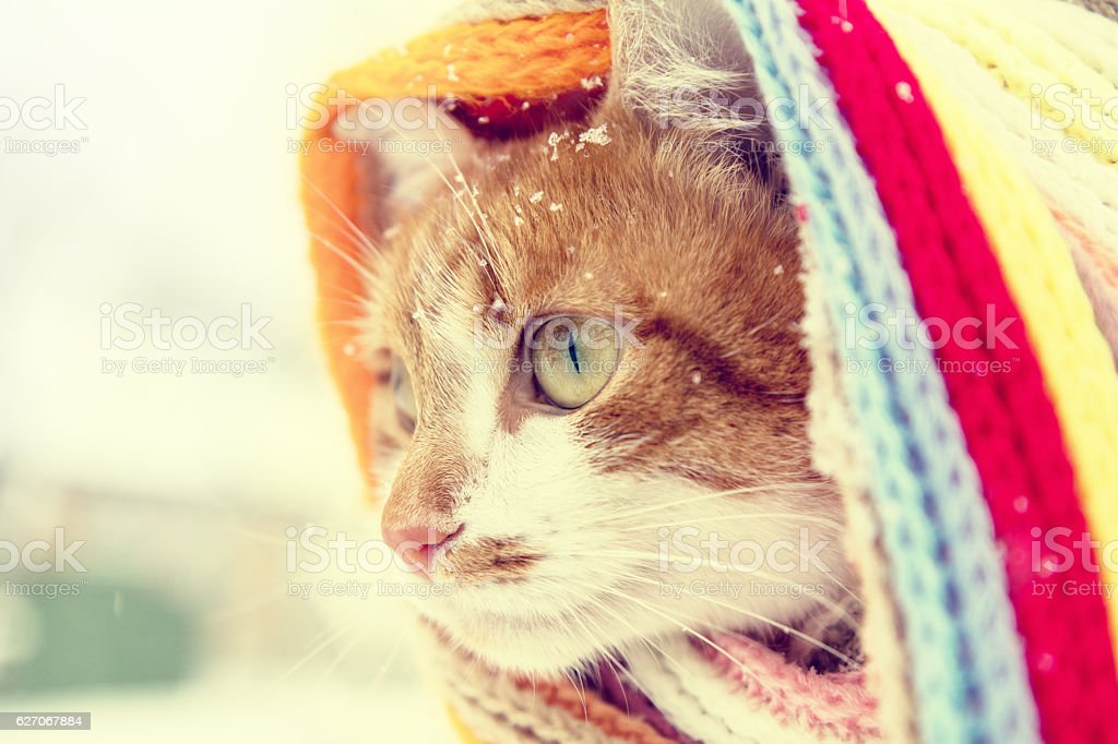 Red and white kitty cat in checkered scarf stock photo