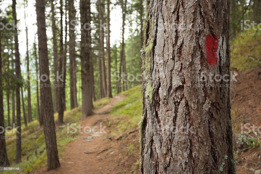 Red and white painted path sign in a pine tree stock photo