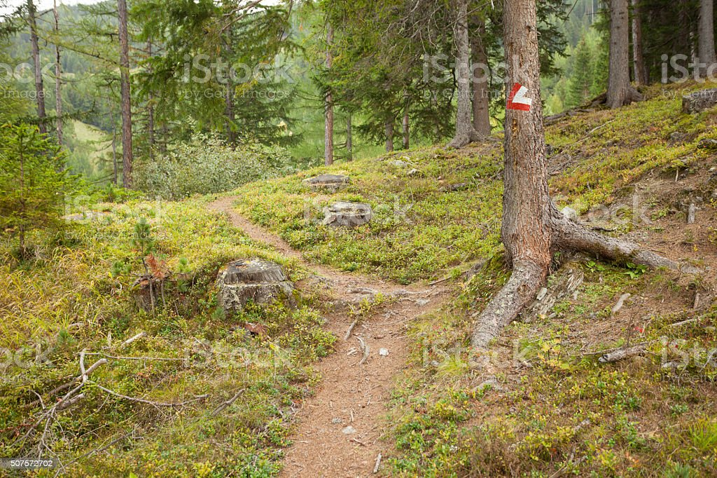 Red and white path sign painted in a pine tree stock photo