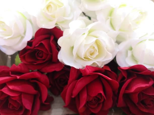 Red and white rose love valentine day picture id1129368411?b=1&k=6&m=1129368411&s=612x612&w=0&h=j wtmxsehfbnvysajo9ll qen92d ysu5k3nte0nw0e=