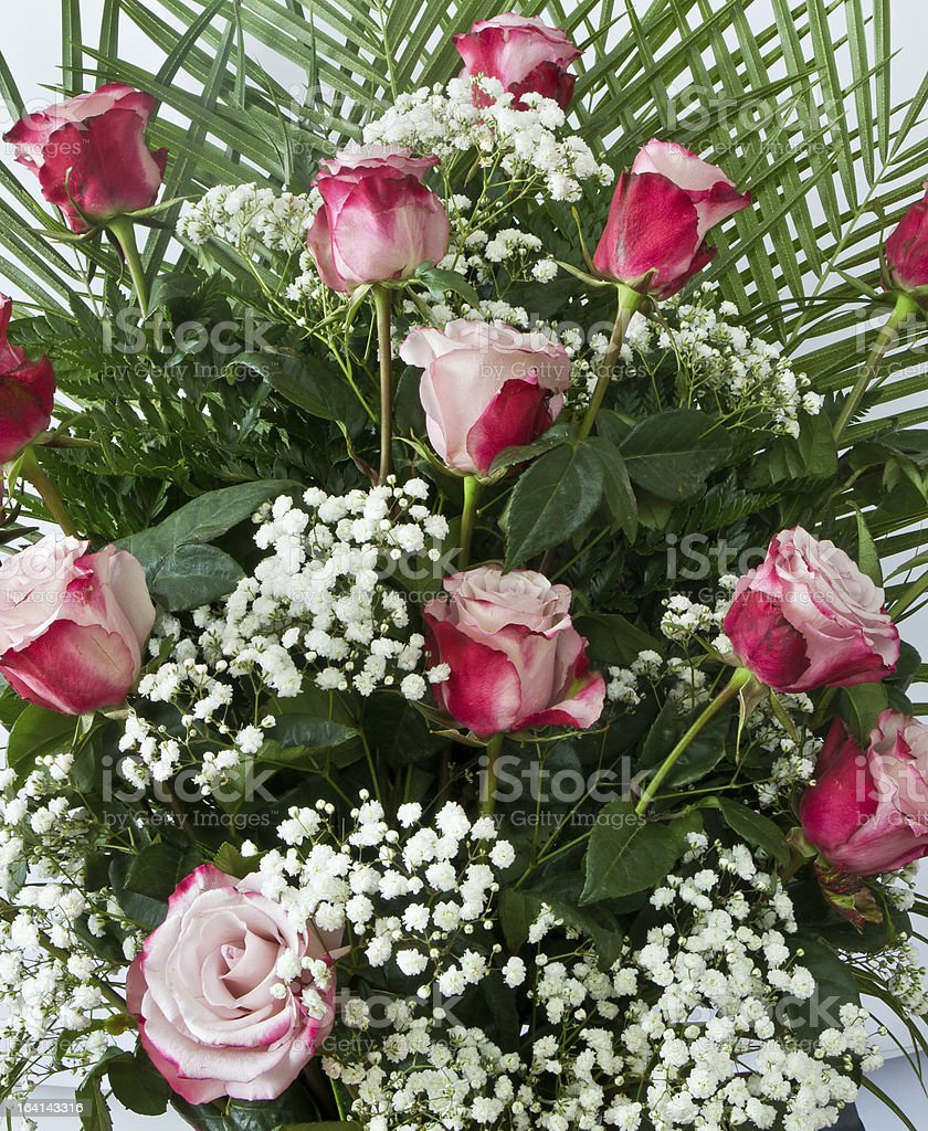 Red and white roses royalty-free stock photo