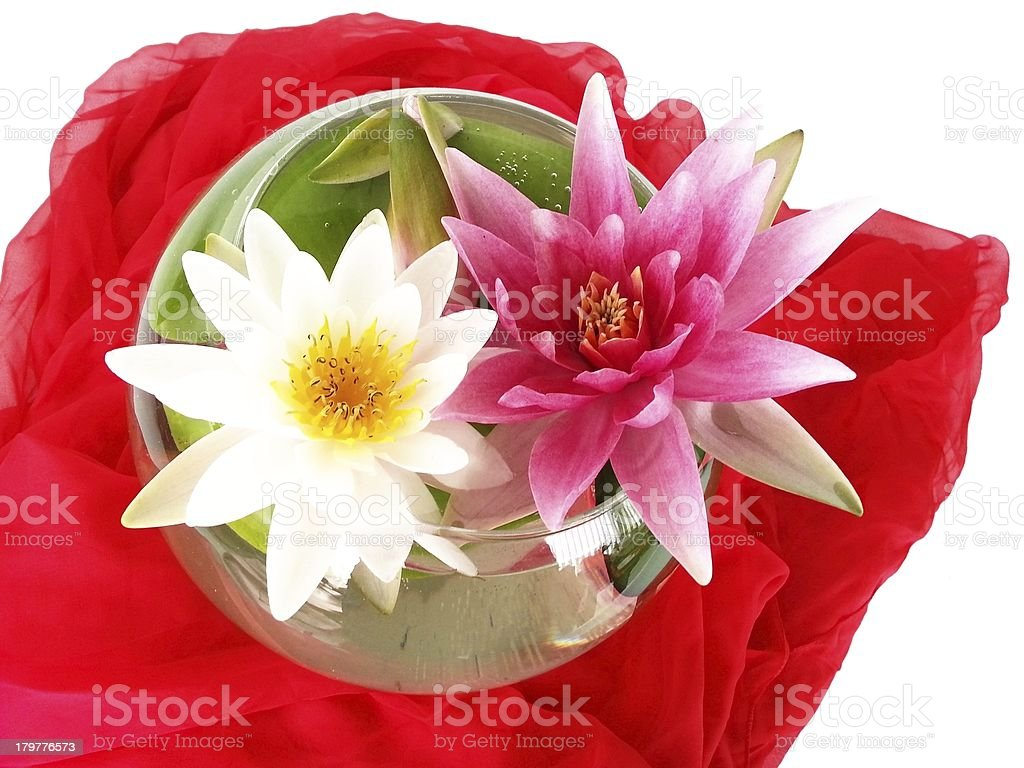 red and white water lily on silk stock photo