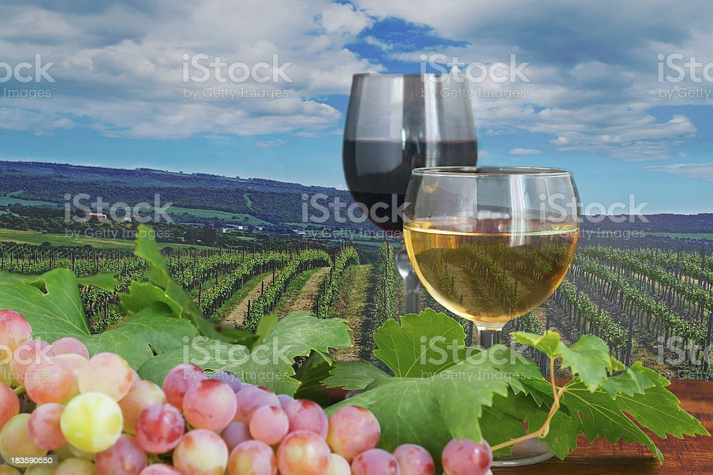 red and white wine in a vineyard royalty-free stock photo
