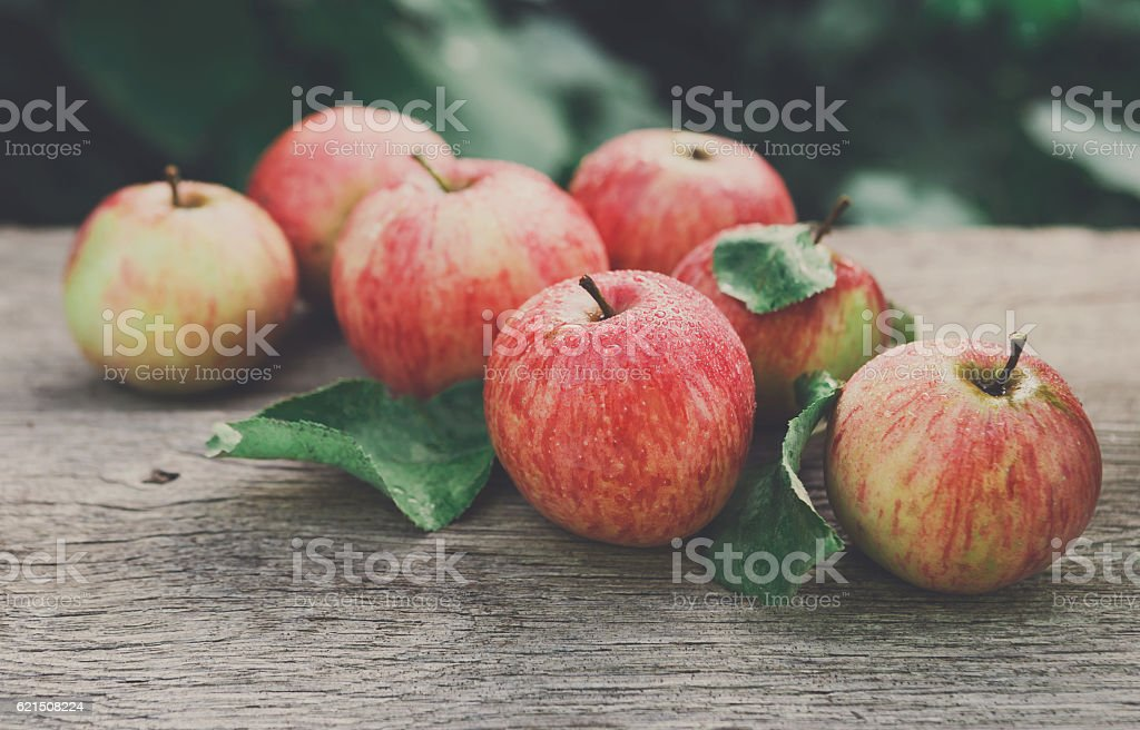 Red and yellow apples harvest in fall garden photo libre de droits