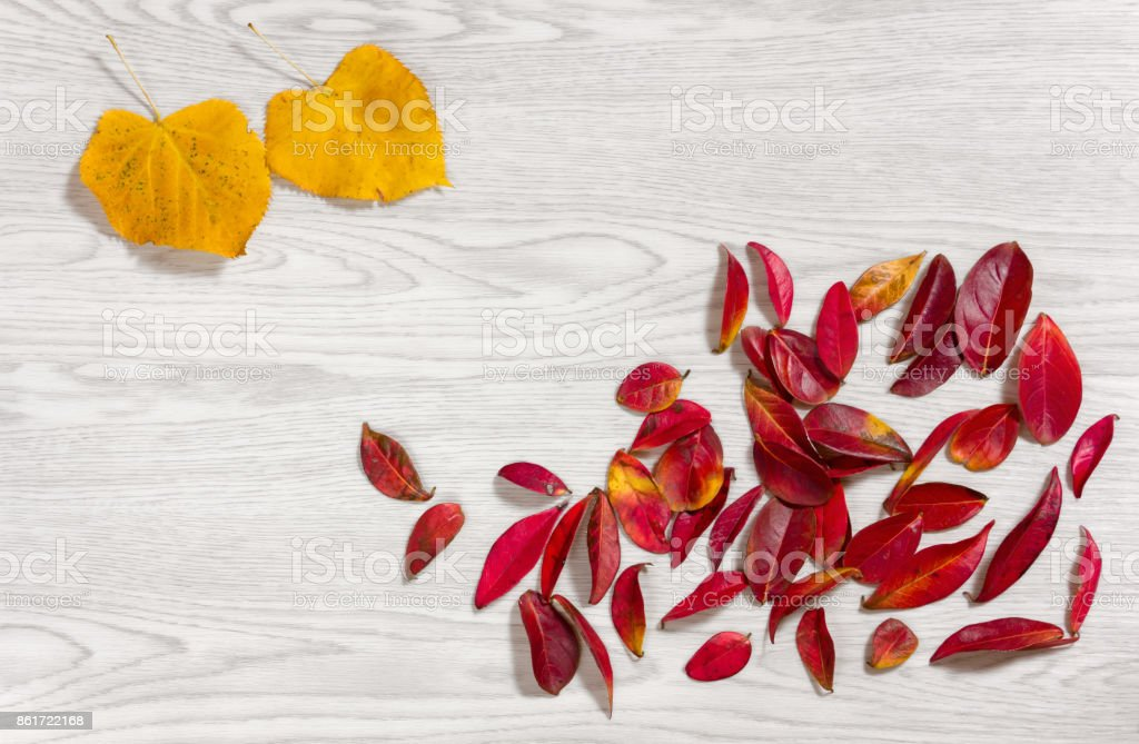 Red and Yellow Autumn Leaves on a Wooden Background stock photo