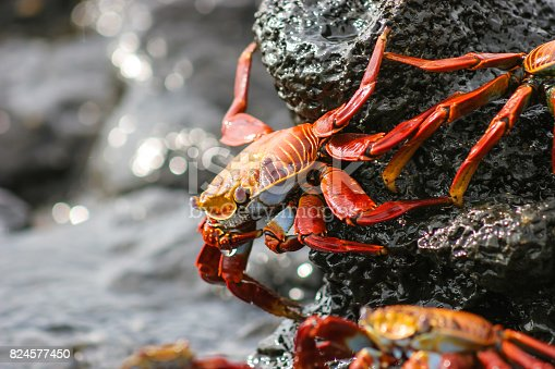 Close to the edge of the water, orange and yellow crabs collect in the tidal rock pools