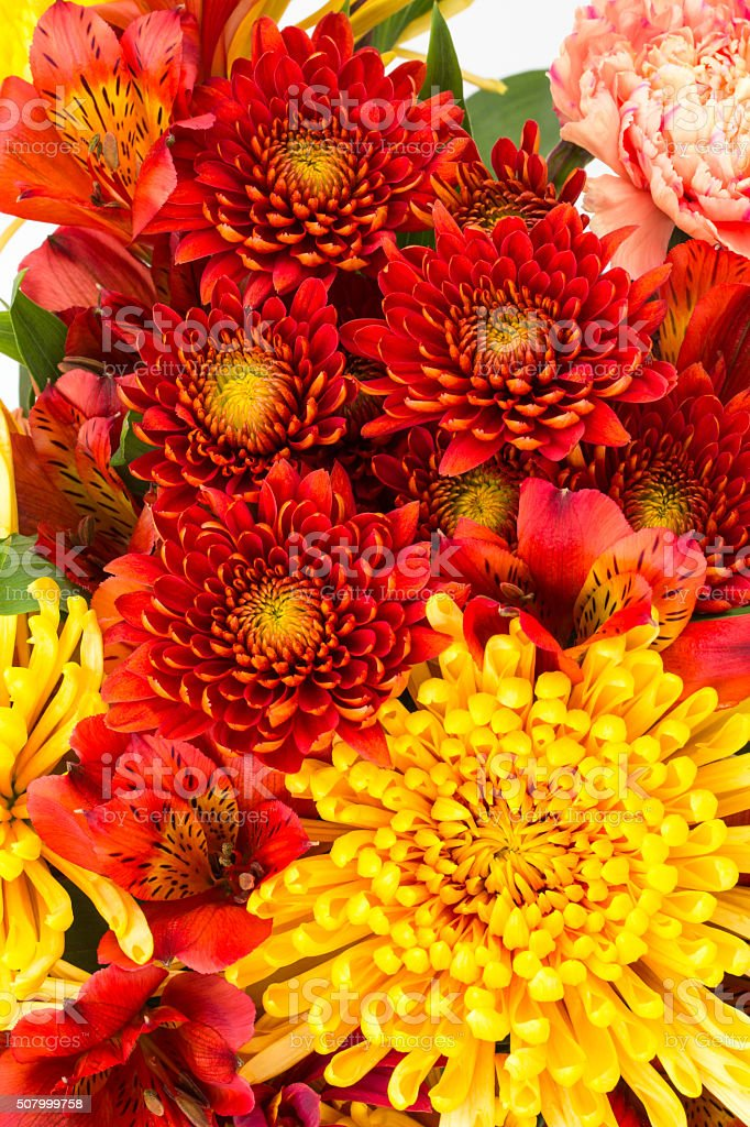 Red and yellow flowers close up stock photo