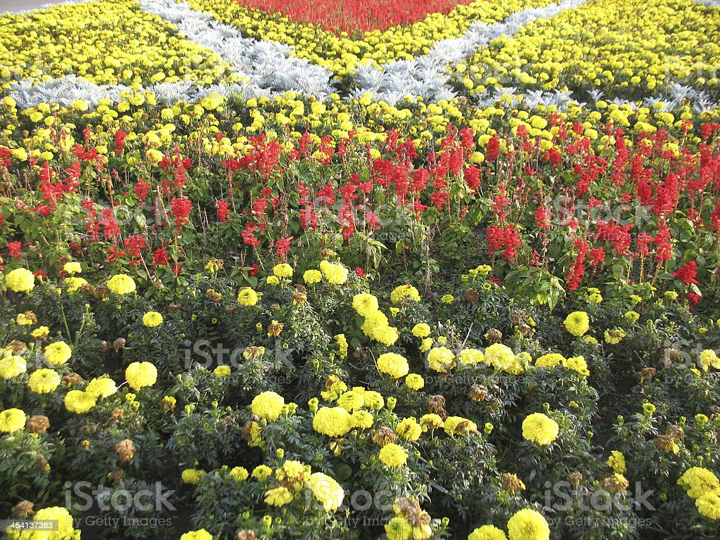 red and yellow flowers royalty-free stock photo