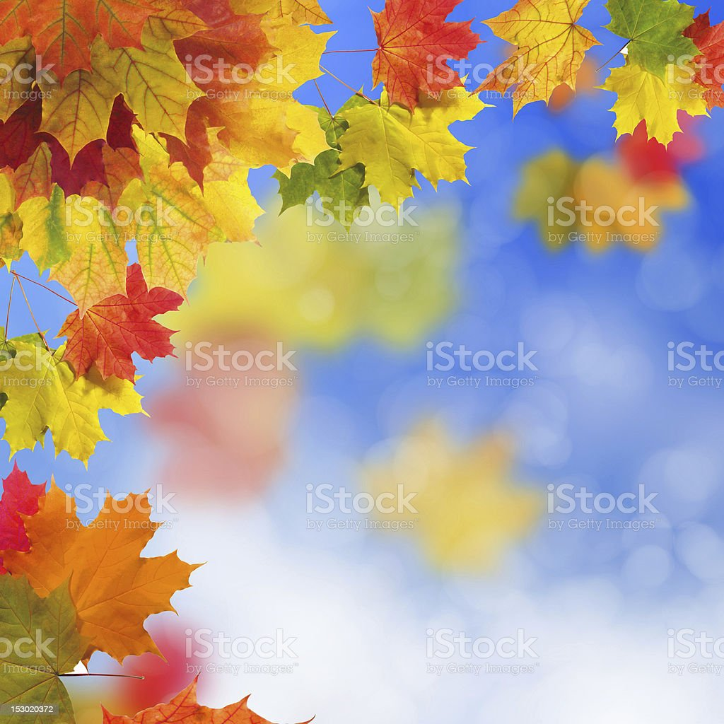 Red and yellow leaves royalty-free stock photo