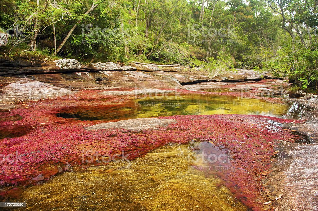 Red and Yellow River in Colombia stock photo