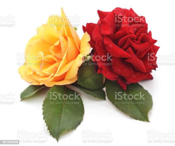 Red and yellow roses picture id951945538?b=1&k=6&m=951945538&s=612x612&h=pircwmeccudjgjypqbqjhpggvovxdgblvzntloj e2m=