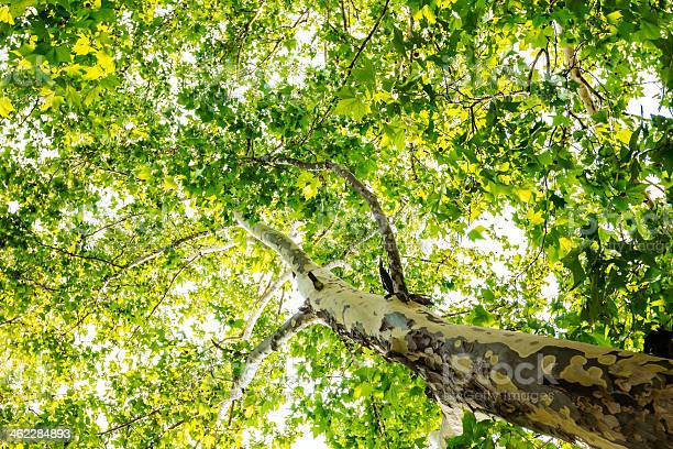 Photo of Red and yellow tree leaves and tree trunk as seen from below