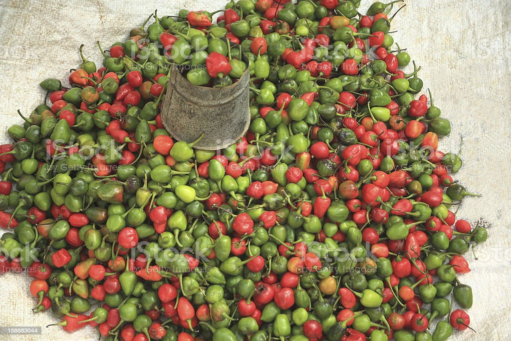 Red ang green peppers on the ground, for sale. stock photo