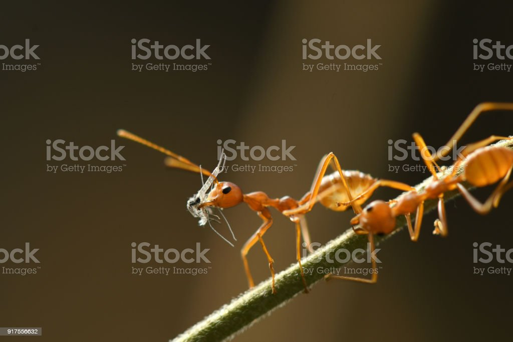 Red Ant in nature background. stock photo