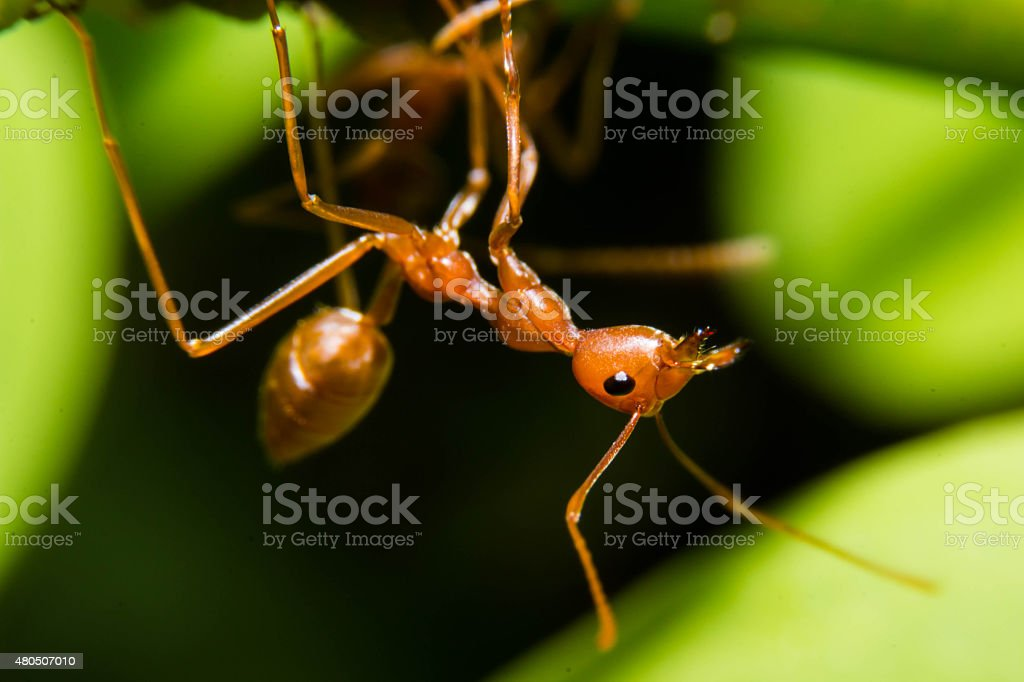 Red ant in the nature stock photo