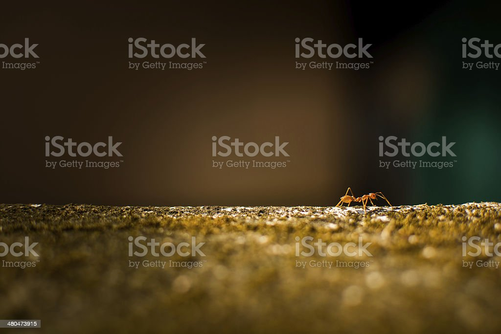 red ant on the wall stock photo