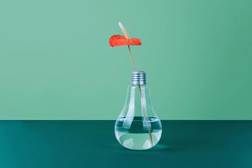 녹색 바탕에 꽃병에 레드 국화 꽃 0명에 대한 스톡 사진 및 기타 이미지