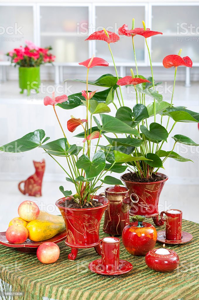 red anthurium in interior royalty-free stock photo