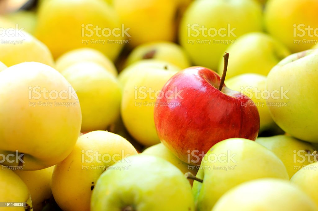 Red apple among group of yellow apples stock photo
