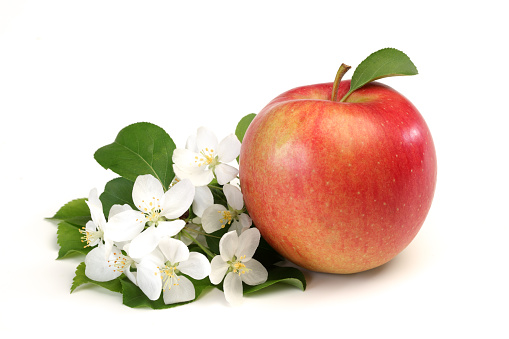 apple flowers and ripe red apples on a white background close-up