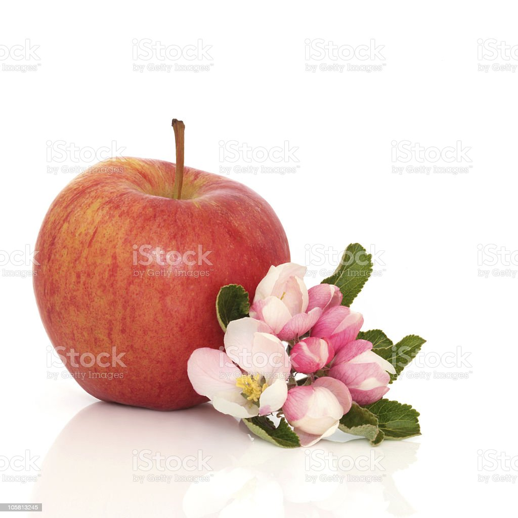 Red Apple and Flower Blossom stock photo