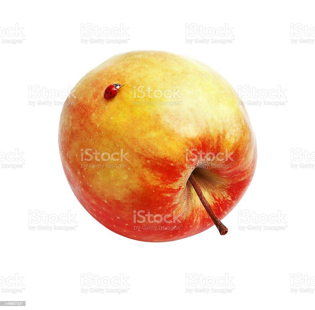 Roter Apfel und Marienkäfer -. Lizenzfreies stock-foto