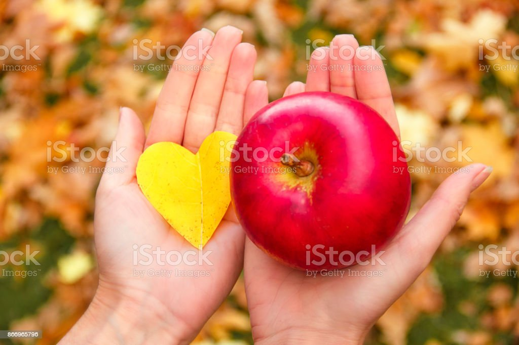 Red apple and yellow autumn leaf in the form of heart in female hands. stock photo