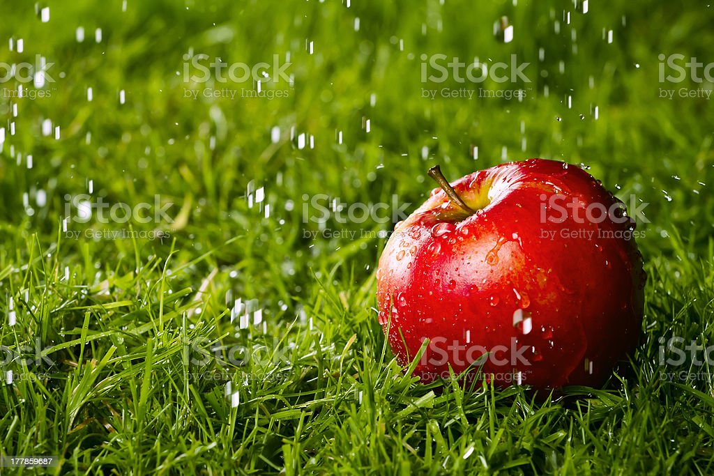 Red apple laying on the grass. royalty-free stock photo