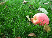 Red apple on grass in the garden. Lawn blur with soft light for background