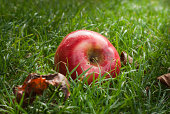red apple lying on green grass
