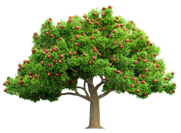 rode appel boom geïsoleerd 3d illustratie - fruitboom stockfoto's en -beelden
