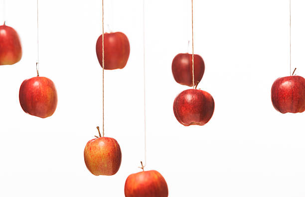 Red apples hanging on string stock photo