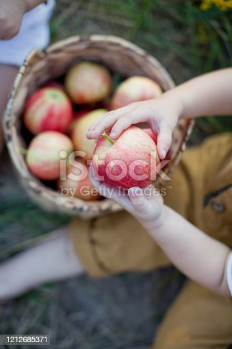 Red apples in a wicker basket. Kids holding apples
