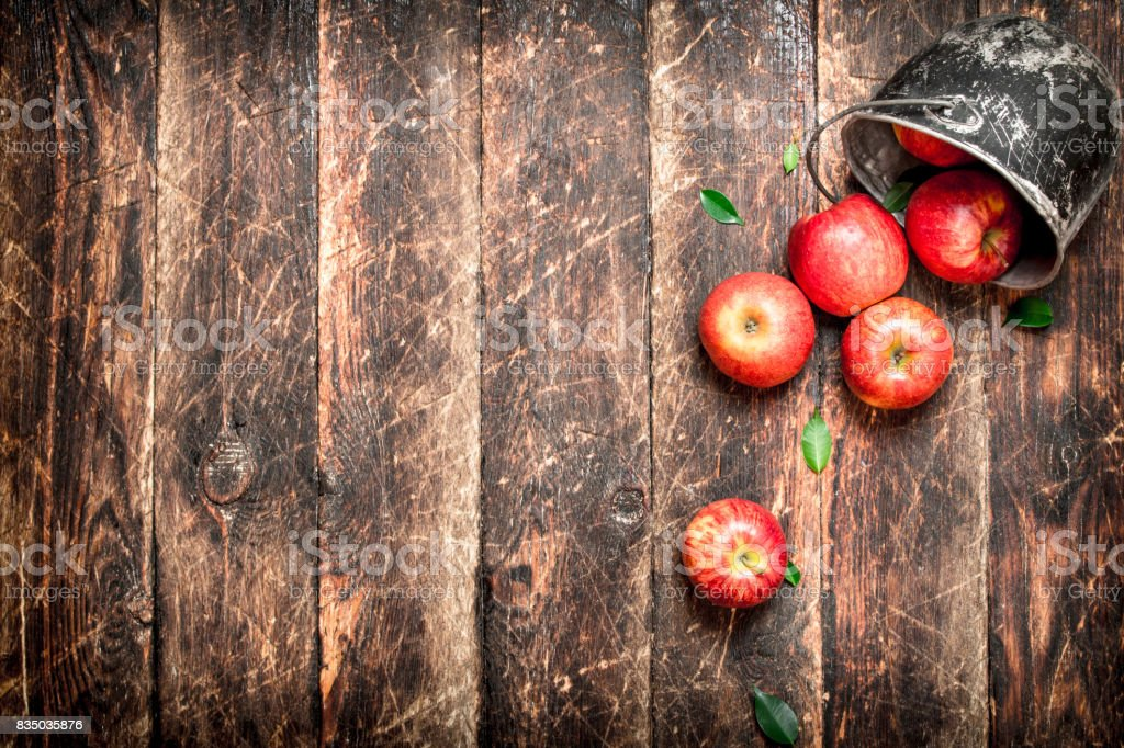 Red apples in an old bucket. stock photo