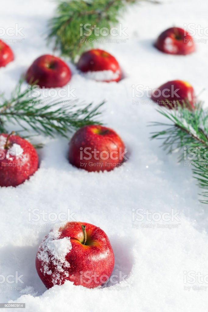 Red apples on white snow stock photo