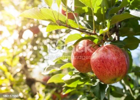 505840263istockphoto Red apples 186117550