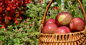 Beautiful red delicious apples in the basket.