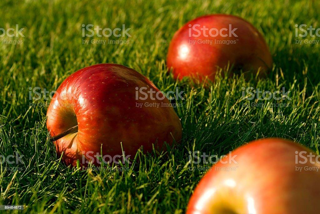 Pommes rouge photo libre de droits