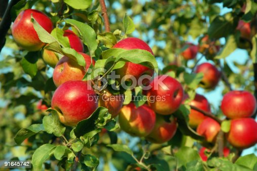 istock red apples 91645742