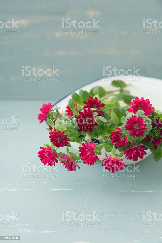 Red Aster flowers Lizenzfreies stock-foto