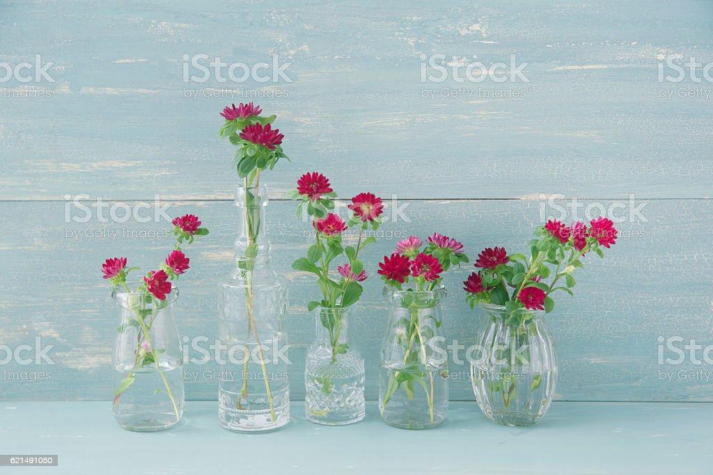 Red Aster flowers photo libre de droits