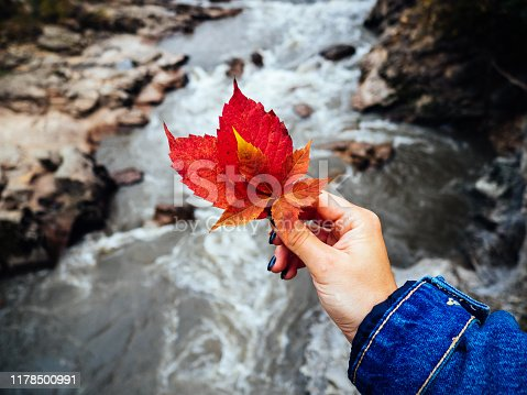 Red autumn leaf in a woman's hand on the background of a fast river. Denim jacket sleeve