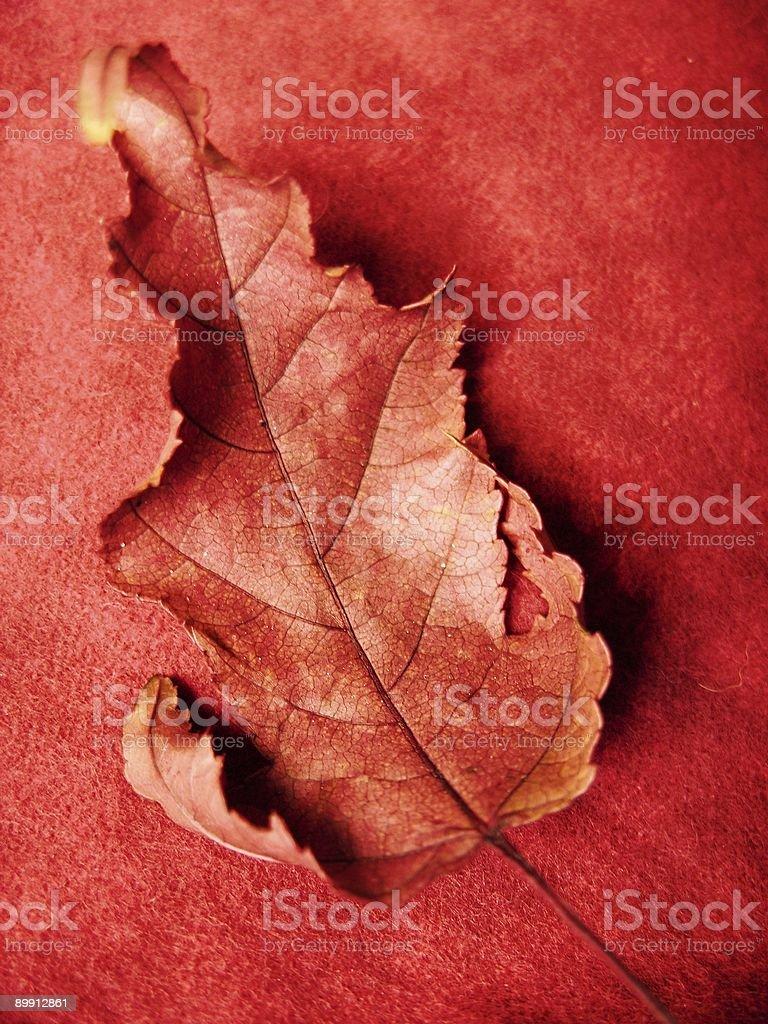Rosso foglia d'autunno foto stock royalty-free