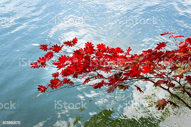 Photo of Red Autumn Leaves on a day in October