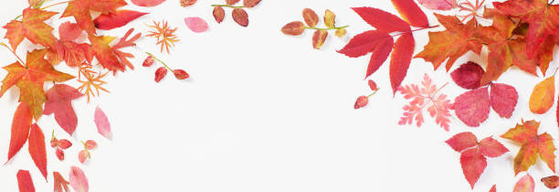 red autumn leaves on white background stock photo