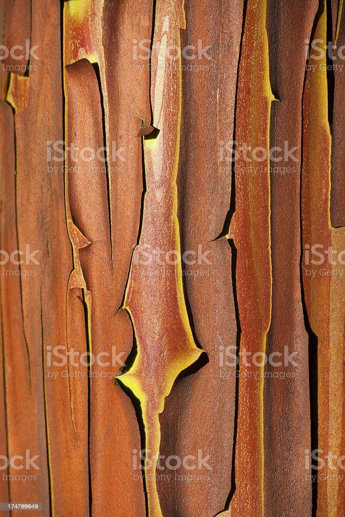Red Bark of Strawberry Tree ( Arbutus andrachnoides). royalty-free stock photo