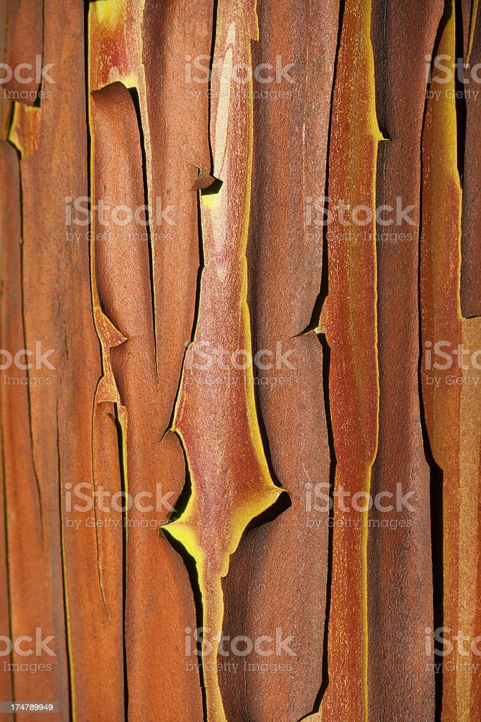 Red Bark of Strawberry Tree ( Arbutus andrachnoides). stock photo